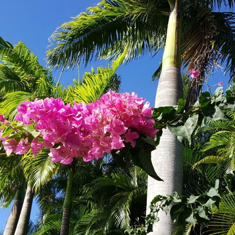plantes-mediterranneenes
