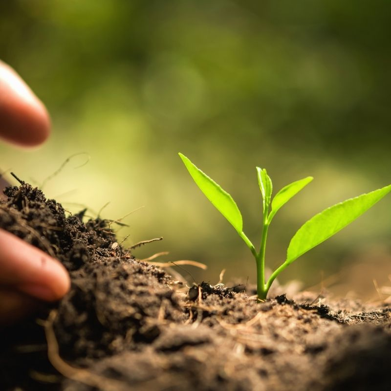 fertilisants